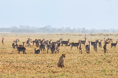Gorongosa Restoration Project, Mozambique