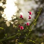 Tamera_Spring_Web