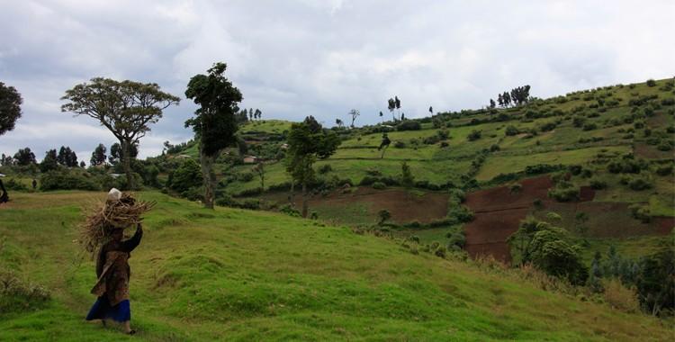 Gishwati Forest, Rwanda
